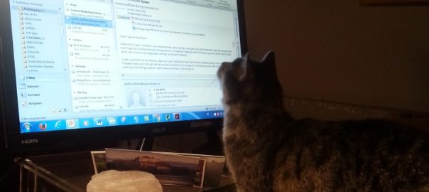 Foto Katze vor Computer
